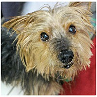 Adopt A Pet :: Miles - Forked River, NJ