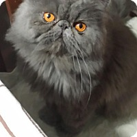 Adopt A Pet :: McGraf - Columbus, OH