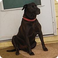 Adopt A Pet :: Tyson - McKenna, WA
