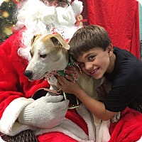 Adopt A Pet :: Hattie - SOUTHINGTON, CT