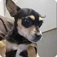 Adopt A Pet :: Symphony - Westminster, CA