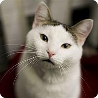 Adopt A Pet :: Alfalfa - Lincoln, CA