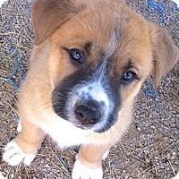 Adopt A Pet :: Jeb - Lakewood, CO