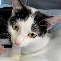 Adopt A Pet :: Tyra - Los Angeles, CA