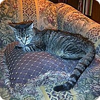 Adopt A Pet :: Tansy - Piscataway, NJ