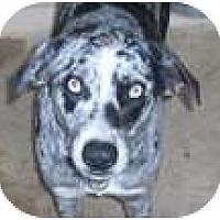 Adopt A Pet :: Blue Boy - P, ME