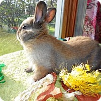 Adopt A Pet :: Sage - North Gower, ON