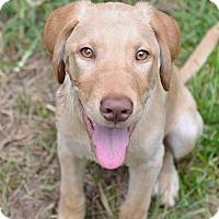 Adopt A Pet :: Tackle - Cumming, GA
