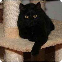 Adopt A Pet :: Tovah - Cincinnati, OH