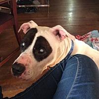 Adopt A Pet :: Parker (Courtesy Post) - Shelbyville, KY
