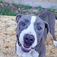 Adopt A Pet :: BoBo - Hankamer, TX
