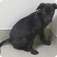 Adopt A Pet :: Josie - Gary, IN