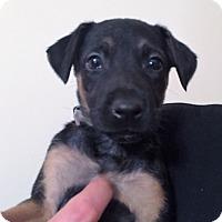 Adopt A Pet :: Makayla - Ft. Lauderdale, FL