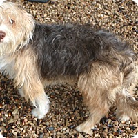 Adopt A Pet :: Peabody - Norwalk, CT