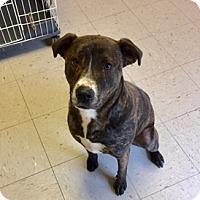 Adopt A Pet :: Axle - Trenton, NJ