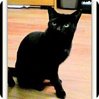 Adopt A Pet :: Nitro - Trevose, PA