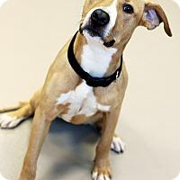 Adopt A Pet :: Neno *Foster* - Appleton, WI
