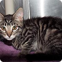Adopt A Pet :: Bonnie - Grants Pass, OR