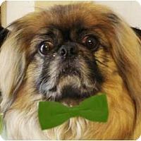Adopt A Pet :: Kato-WV - Beckley, WV