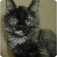 Adopt A Pet :: Unmade Bed - Pendleton, OR