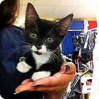 Adopt A Pet :: Luna - Ft. Lauderdale, FL