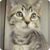 Adopt A Pet :: Grover - Maywood, NJ
