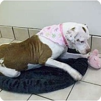 Adopt A Pet :: Daisy - Washington, NC