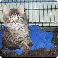 Adopt A Pet :: Rhett - Sterling Hgts, MI