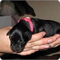 Adopt A Pet :: Kiwi - Meridian, ID