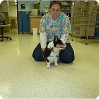 Adopt A Pet :: Lucy - Inola, OK