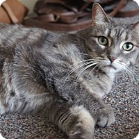 Adopt A Pet :: Lily - St. Catharines, ON