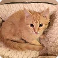 Adopt A Pet :: Owen - McHenry, IL