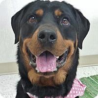 Adopt A Pet :: Jade - Chambersburg, PA