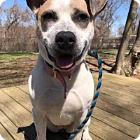 Adopt A Pet :: Speckles - Media, PA