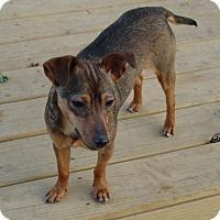 Adopt A Pet :: Isabel - Staunton, VA