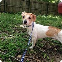 Adopt A Pet :: Franklin - Tallahassee, FL