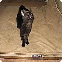 Adopt A Pet :: Brent - Grand Rapids, MI