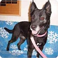 Adopt A Pet :: Ragan - Chicago, IL
