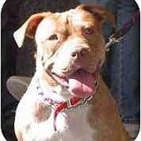 Adopt A Pet :: Precious - Auburn, CA