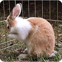 Adopt A Pet :: Sweetie - Huntsville, AL