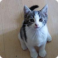 Adopt A Pet :: ROSIE - 2014 - Hamilton, NJ