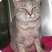 Adopt A Pet :: Pepper - Dover, OH