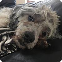 Adopt A Pet :: Sally May - Woodland, CA
