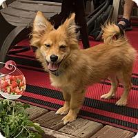 Adopt A Pet :: Oz - Edmonton, AB