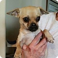 Adopt A Pet :: Stacey - Mesa, AZ
