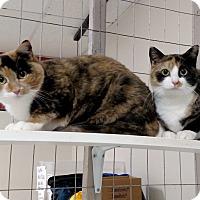 Adopt A Pet :: Bridgette & Claire - Winchendon, MA