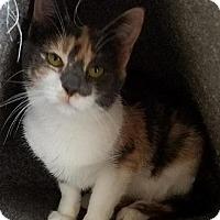 Adopt A Pet :: Calgary - Westminster, CA