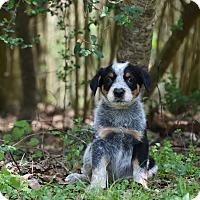Adopt A Pet :: Night - Groton, MA
