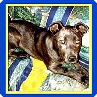 Adopt A Pet :: Roxie - Murrieta, CA