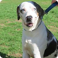 Adopt A Pet :: Duke - Marble Falls, TX